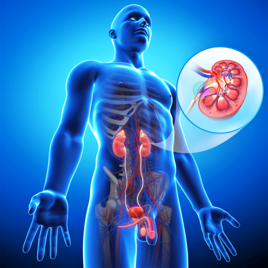Take Care of Your Kidneys in 5 Ways